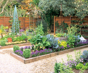 Vegetable garden the mullett family for Veggie garden designs